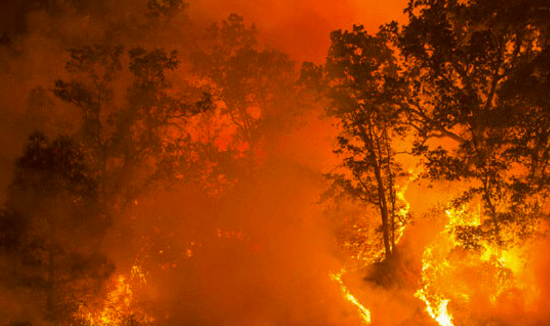 Wildfire Outlook: March 2021 – June 2021