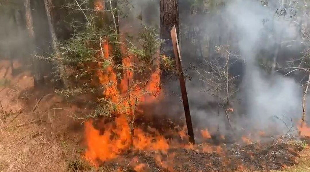 Arizona's 2021 wildfire season expected to have 'very severe potential'