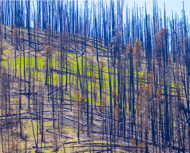 Wildfires and wildlife: How animals survive fires and how you can help
