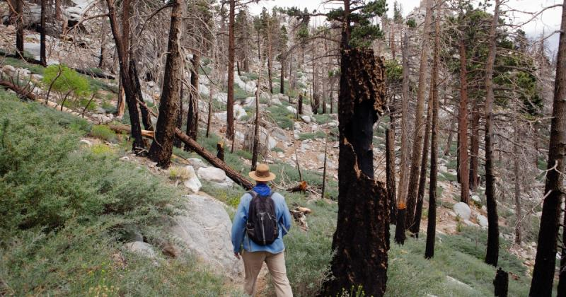As California burns, some ecologists say it's time to rethink forest management
