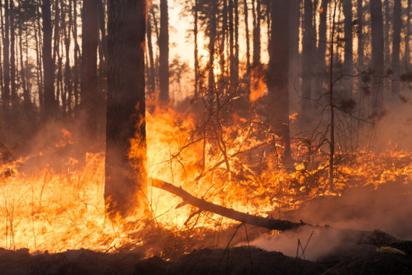 Viewpoint: Is California Serious About Addressing the Wildfire Risk? Not So Much.
